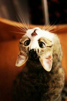 Risultati immagini per gattino