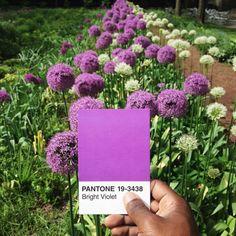 purple flowers pantone