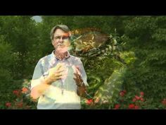 Japanese Beetles On Your Roses