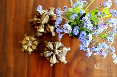Spring is in the air... Copyright of http://monsoonspice.com