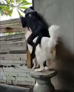 These cute dogs are so interested in the neighbors! Source by destructionbay dog dog memes dog videos videos wallpaper dog memes dog quotes dogs dogs pictures dogs videos puppies puppy video Cute Puppies, Cute Dogs, Dogs And Puppies, Doggies, Cute Animal Videos, Funny Animal Pictures, Funny Animal Memes, Cat Memes, Dog Pictures