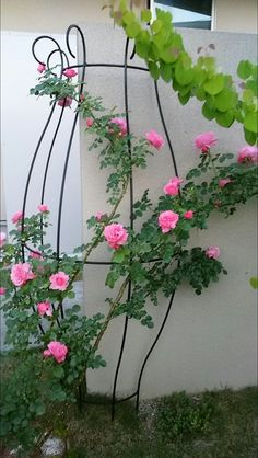 曲線がキレイなトレリス T-1600 | GARDEN★garden★ガーデン - 楽天ブログ Garden Arch Trellis, Vine Trellis, Flower Words, Flower Images, Front Porch Planters, Climbing Flowers, Rose Garden Design, Garden Gifts, Garden Accessories