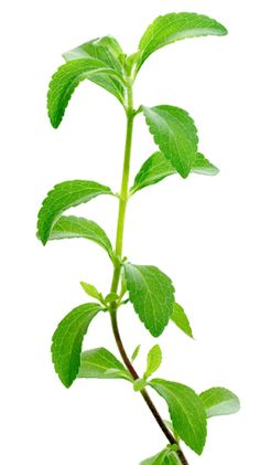 Food Babe - Stevia Plant. Is stevia healthy and a good alternative sweetener to sugar? Read this article for the dos and don'ts.