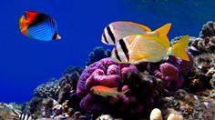 Colorful Corals and Fish wallpaper - ForWallpaper.