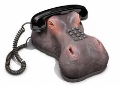 Ring, ring! Calling all hippo fans!
