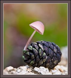 Synergy. The shroom needs the food, and the pine cone needs to return to the earth.