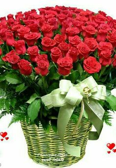 Beautiful Flowers Images, Beautiful Bouquet Of Flowers, Romantic Flowers, Exotic Flowers, Beautiful Roses, Pretty Flowers, Pink Flowers, Rose Flower Pictures, Love Rose Flower