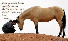 Bildresultat för zen horse