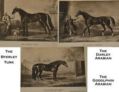 The pedigree of each Thoroughbred can be traced back to these three stallions