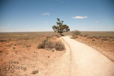 A path leads to a lone tree overlooking the dried old lake and blue sky, Mungo National Park, New South Wales