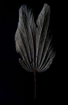 Black | 黒 | Kuro | Nero | Noir | Preto | Ebony | Sable | Onyx | Charcoal | Obsidian | Jet | Raven | Color | Texture | Pattern | Styling | Leaf