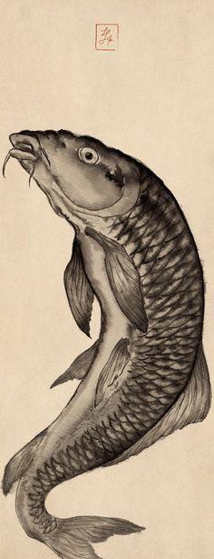 魚黒 Carp 鯉