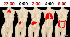Why You're Waking Up at the Same Time Every Night According to Traditional Chinese Medicine, chronic sleep disorders are usually caused by a Yin-Yang imbalance Online Nursing Schools, Nursing Jobs, Home Health Care, Health Tips, Lose Arm Fat, Accelerated Nursing Programs, Traditional Chinese Medicine, Herbal Medicine, Health Problems
