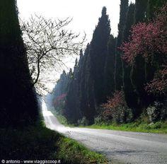 Road to amazing Bulgheri, Tuscany
