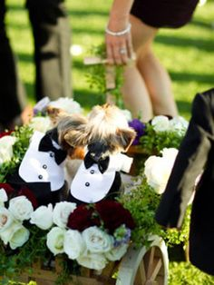 dogs being wheeled down the aisle wearing mini tuxedos