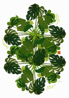 garabating:  Marie ThorhaugeMonstera Deliciosa.So easy to love plants - and this one doesn't even need watering!limited edition print to come..