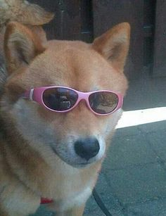 shady pals that r sonewhate a mood Cute Animal Memes, Cute Memes, Cute Puppies, Cute Dogs, Cute Babies, Shiba Inu, Cute Baby Animals, Funny Animals, Mood Pics