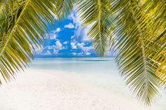 Beautiful Maldives beach with palm trees and a tranquil view