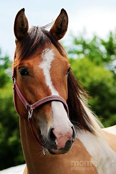 Ohhh I LOVE this horse it's just SO CUTE