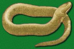 What are Caecilians? Learn about amphibians while reading The Salamander Room