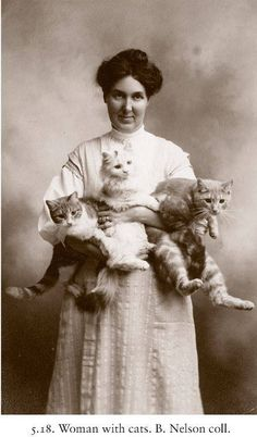 """Image from """"The Photographed Cat"""""""