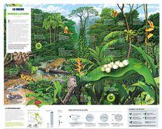 Rain Forest/ Costa Rica in the nature