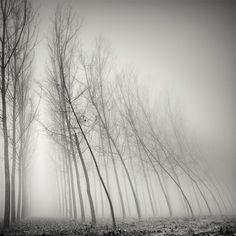 Long Exposure Tree Landscapes by Pierre Pellegrini via Colossal:    http://www.thisiscolossal.com/2013/03/long-exposure-tree-landscapes-by-pierre-pellegrini/