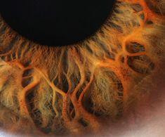 Eye Close Up by Robert D Bruce, via Flickr