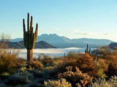 In case you are looking for bargain Arizona land for sale deals then browse Land Century listings today.