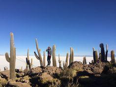 Em meio ao Salar de Uyuni existe uma olha de pedra com cactos gigantes! É chamada Isla Incahuasi Bolivia, Seattle Skyline, Monument Valley, Chile, Tours, America, Travel, Sidewalk, Places