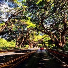 Porsche Boxster on Maui