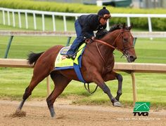 Watch American Pharoah at Churchill Downs here: http://www.hrtv.com/american-pharoah-videos/ …