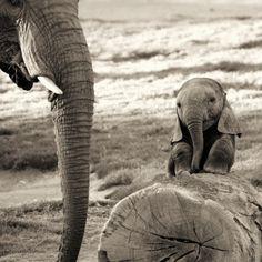 ...Baby elephant !