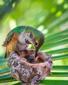 Pretty Birds, Love Birds, Beautiful Birds, Animals Beautiful, Animals And Pets, Baby Animals, Cute Animals, Polo Norte, Polo Sul