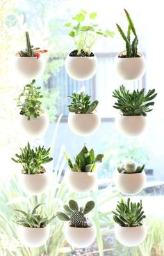 Small E House Plant Display Ideas