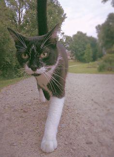 Random cat I saw on my run...