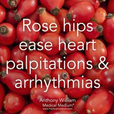 Rose hips help ease heart palpitations & arrhythmias🌟 Learn more about the healing powers of rose hips in Life-Changing Foods, link in… Health Facts, Health And Nutrition, Health Tips, Health And Wellness, Health Benefits, True Health, Health Quotes, Health Care, Holistic Remedies