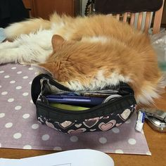. My front view🤔 さっきまで床でぬくぬく寝てたのに作業を始めたとたん、乗せて乗せて〜とこの有様😅 お行儀悪いですね、パパに怒られるよ! . どうしても私の目の届くところに居たいらしい… 喉鳴らしながら寝ています😴😴 . . . #ふわもこ部 #cat#catstagram#猫スタグラム#猫#愛猫#毛玉 #冬毛 #長毛猫 #dailyhappiness#onthetable#きゅてぃさん#甘えんぼさん