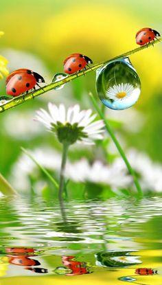 - Marienkäfer - Welcome Haar Design Beautiful Bugs, Amazing Nature, Beautiful Flowers, Animal Pictures, Cute Pictures, Beautiful Pictures, Belle Photo, Beautiful Creatures, Nature Photography