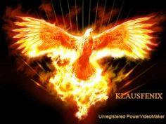 pictures of a phoenix firebird - Aztec Media Yahoo Search Results Phoenix Rising, Phoenix Art, Phoenix Images, Phoenix Animal, Jean Michel Jarre, Albedo, Rise From The Ashes, Firebird, Tattoo Ideas