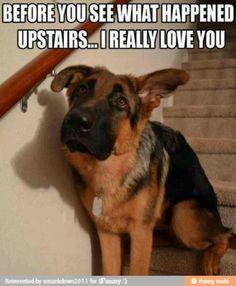 Funny animal memes make me laugh - dog memes Funny Animal Memes, Cute Funny Animals, Funny Animal Pictures, Funny Dogs, Funny Memes, Animal Funnies, Dog Pictures, Funny Photos, Funniest Pictures