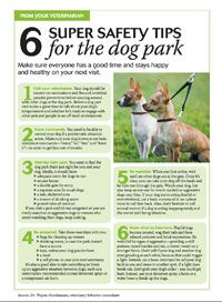 Want to take your dog to the dog park? Read this for 6 super safety tips for the dog park.