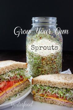 Sprouts are a nutritional powerhouse and so good for health!  Easy to grow - learn how at Yesterfood : Grow Your Own Sprouts