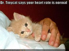 Dr. Tinycat says your heart rate is normal