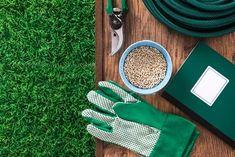 Aprende a cultivar canela en casa — Mejor con Salud