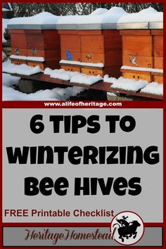 Bees | Winterizing beehives | Bees in the Winter | These 6 tips to winterizing bee hives will give you and your bees the boost they need to get through the winter months into spring and blooming flowers!