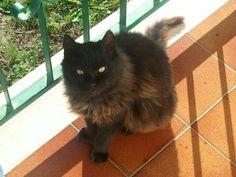 My sweet big black cat <3