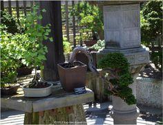 Bonsai collection at The Arnold Arboretum in Boston, Massachusetts