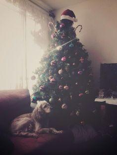 Una navidad con mi cocker ♡  #Christmas #Tree #Navidad #perro #cocker #Dogs #Dog #Diciembre #December  #mascota