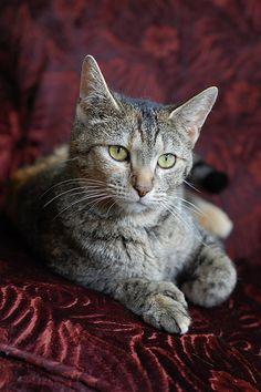 Cat  beautybeulah